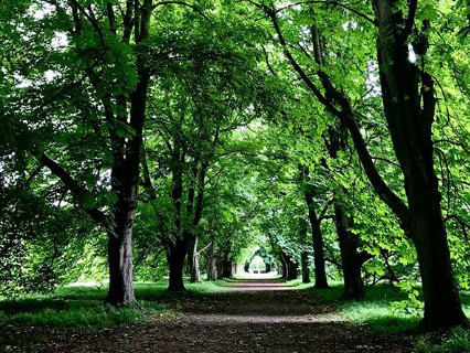 Anglesey Abbey Forest Walk