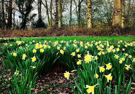 Felbrigg Garden Norfolk by 13 Weeks Travel