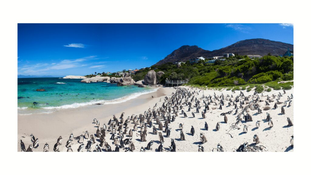How to travel to Africa Penguins on the beach in South Africa