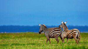 Kenya Africa Safari   Lake Nakuru National Park